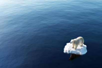 Polar bear on an ice floe surrounded by water